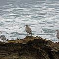 Gulls Podium  by Shoal Hollingsworth
