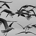 Gulls by Robert Phelan