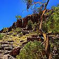 Gum Tree At Ellery Creek V2 by Douglas Barnard