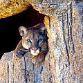 Guardian Of The Cliff by Jim Barbour