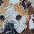 Gus - English Bulldog Commission by Anita Putman