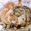 Gutter Kitties Five by Alice Gipson