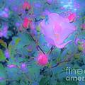 Gypsy Rose - Flora - Garden by Susan Carella