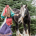 Gypsy Vanner Dance by Toni Thomas