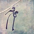 Key With A Ribbon by Priska Wettstein