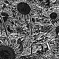 H2 Sunflowers Map Bw by Dale Crum