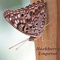 Hackberry Emperor by April Wietrecki Green