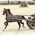 Hackney Pony Cart by Alice Gipson