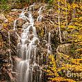 Hadlock Fall In Acadia by Susan Cole Kelly