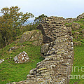 Hadrian's Wall Near Walltown Quarry by Louise Heusinkveld