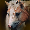 Haflinger Foal Friends by Posey Clements