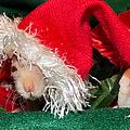 Hairless Christmas by Art Dingo