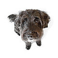 Hairy Dog Photographic Caricature by Natalie Kinnear