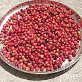 Haitian Cherries by Patricia Kantrowitz