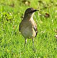 Half Beak Will Travel by David Lee Thompson