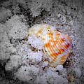 Half Buried Shell by Laurie Pike