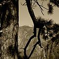 Sierra Nevada Sepia by Mini Arora