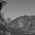 Half Dome In Distance Black And White by Mini Arora