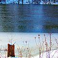 Half Frozen River Bank by Tina M Wenger