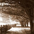 Half Moon Bay Pathway by Carol Groenen