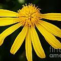 Half Yellow by Ben Yassa