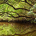 Halfway Creek At Low Tide - Everlglades by Matt Tilghman