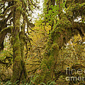 Hall Of Mosses 3 by Tracy Knauer