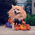 Halloween Dog by Charline Xia