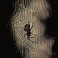 Halloween - Spider by Travis Truelove