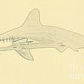 Hammerhead Shark Illustration by Wernher Krutein