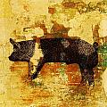 Swedish Hampshire Boar 4 by Larry Campbell