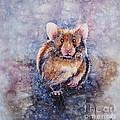 Hamster by Zaira Dzhaubaeva