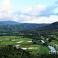Hanalei Valley by Linda Arnado