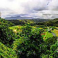 Hanalei Valley by Richard Lynch