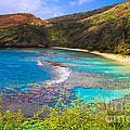 Hanauma Bay In Hawaii by Ami Parikh