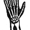Hand Bones by Jeffrey Oleniacz