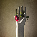 Hand Holding Rose by Terry Rowe