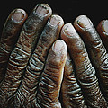 Hands Of Time 2 by Skip Nall