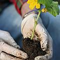 Hands Planting Plant by Konstantin Sutyagin