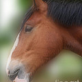 Handsome Bay Shire Horse by Smilin Eyes  Treasures