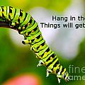 Hang In There by Nina Silver