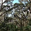 Hang Moss Tree Trail by Lisa Williams