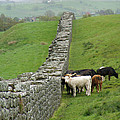 Hangin Out At Hadrians Wall England Scotland by Lesley Nolan