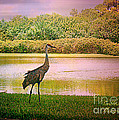 Hanging Around The Beautiful Florida Sand Crane by Carol Grenier