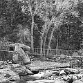 Hanging Bridge In Black And White by James BO  Insogna