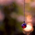 Hanging By A Thread by Bonnie Bruno