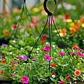 Hanging Flower Baskets Shallow Dof by Amy Cicconi