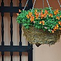 Hanging Flowers And Black Gate by Bruce Gourley