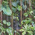 Hanging Gardens V5 by Douglas Barnard