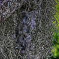 Hanging Moss by Charles Davis